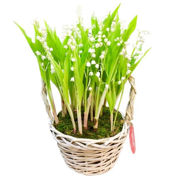 Где купить цветы ландыши в москве, цветы