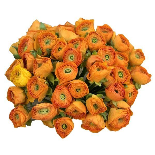 Доставка цветов и букетов Горки-2